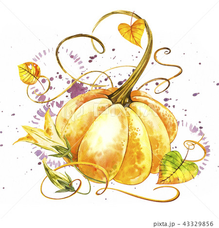 Pumpkin. Hand drawn watercolor painting on white background. Watercolor illustration with a splash. 43329856