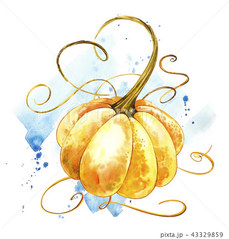 Pumpkin. Hand drawn watercolor painting on white background. Watercolor illustration with a splash. 43329859
