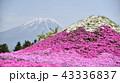 富士山 芝桜 山の写真 43336837