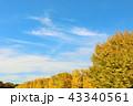 青空 秋 秋晴れの写真 43340561