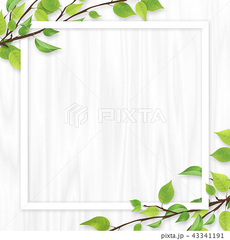 新緑 葉 白いフレーム 白木 43341191