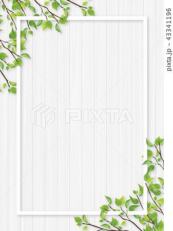 新緑 葉 白いフレーム 43341196