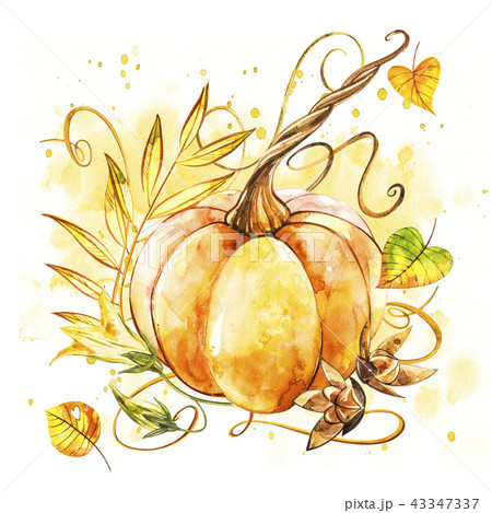 Pumpkin. Hand drawn watercolor painting on white background. Watercolor illustration with a splash. 43347337