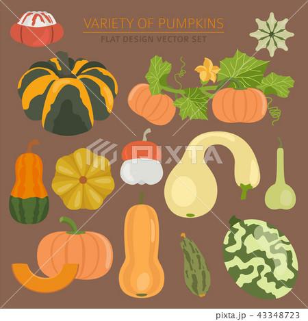 Variety of pumpkins. Flat design set 43348723