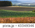 北海道の風景 43349346