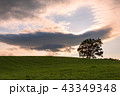 北海道の風景 43349348