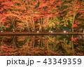 曽木公園の紅葉 43349359