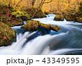 奥入瀬渓流 43349595
