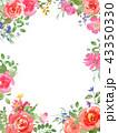 花 バラ フレームのイラスト 43350330