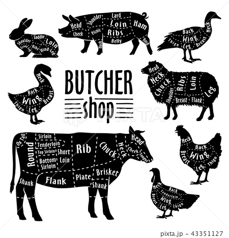 Cut of animals meat, diagram for butcher. Meat cut set 43351127