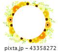 黄色いガーベラのフレーム 43358272