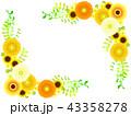 黄色いガーベラのフレーム 43358278