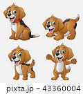 わんこ 犬 こいぬのイラスト 43360004