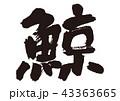 鯨 筆文字 文字のイラスト 43363665
