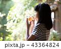 飲み物 飲む 女性の写真 43364824