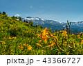 白山高山植物園 高山植物園 白山の写真 43366727