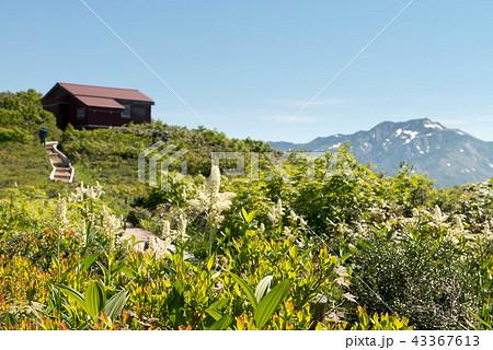 赤兎山の初夏 43367613