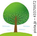 新緑 木 丘のイラスト 43370072