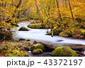 奥入瀬渓流 43372197