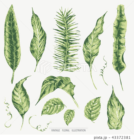vector template card of green tropical leavesのイラスト素材