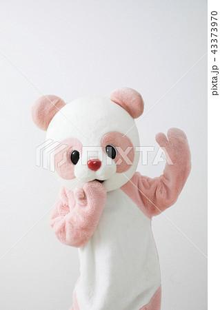 着ぐるみ パンダ かわいい 白バック ポーズ 43373970