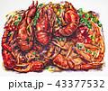ザリガニ 海老 エビのイラスト 43377532