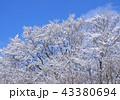 晴れ 晴天 木々の写真 43380694