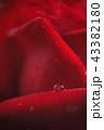 赤い薔薇と雫 43382180