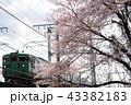 電車と桜 43382183