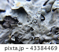 Lichen close-up background with beautiful macro plant leaves 43384469