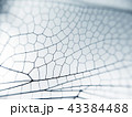 Dragonfly wing close up background with zoomed transparent lattice 43384488