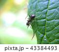 Ant looking over defocused macro green leaf edge 43384493