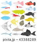 熱帯魚 魚 観賞魚のイラスト 43388289