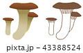 食用キノコ 菌類 茸のイラスト 43388524