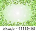 新緑 葉 キラキラ パーティクル 中心から 43389408