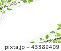 新緑 フレーム 若葉のイラスト 43389409