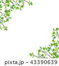 新緑 枝 葉っぱ (PNG、透過、正方形) 43390639