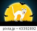ハロウィン ねこ ネコのイラスト 43392892