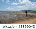 風景 石垣島 干潟の写真 43399043