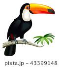 Vector Toucan with Orange Beak 43399148