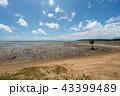 風景 石垣島 干潟の写真 43399489