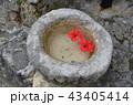 沖縄 那覇  43405414