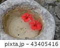 沖縄 那覇  43405416