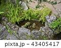 沖縄 那覇  43405417