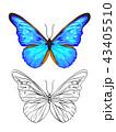 羽 カラー 色のイラスト 43405510