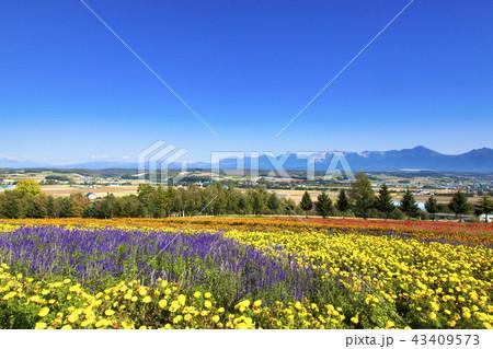 北の大地と花畑 43409573