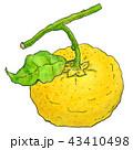 柚子2 43410498