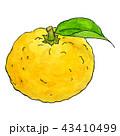 柚子1 43410499
