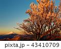富士山 樹氷 朝焼けの写真 43410709