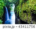 高千穂峡 真名井の滝 明け方 【宮崎県】 43411756